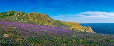 Bluebells, Saltee Islands, Co Wexford, Ireland Flora And Fauna, Mountains, Wexford Ireland, Celebrities, Water, Travel, Outdoor, Image, Beauty