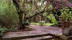 Distorsión Maestra: Jardines de Casa Ortega. El paraíso en pleno Tacubaya.