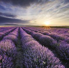 Nástěnný kalendář 2016 Provence(LP10-16)