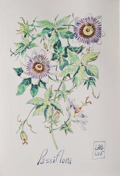 Passiflora, tavola illustrata ad acquerello. Passiflora table illustrated in watercolor di LabLiu su Etsy
