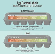 What Egg Carton Labels Really Mean for You and the Chicken courtesy Andrea Moore.