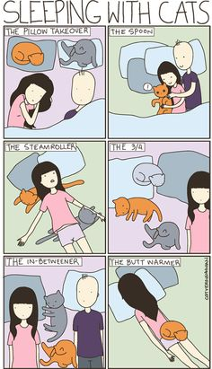 Funny pictures about Sleeping with cats. Oh, and cool pics about Sleeping with cats. Also, Sleeping with cats. I Love Cats, Cute Cats, Funny Cats, Funny Animals, Cute Animals, Funny Humor, Funny Stuff, Crazy Cat Lady, Crazy Cats