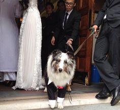 @Dianna McDougall: Spotted this adorable guy at a wedding in Chelsea last fall