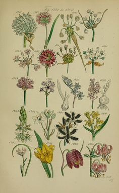 n318_w1150 by BioDivLibrary, via Flickr