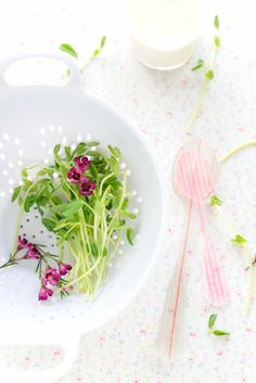 #food photography #styling #fresh organic pea sprout