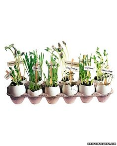 Save egg shells and let kids plant seeds in them with a little soil and plant them in the ground once the seedling grows enough! #spring #garden #craft