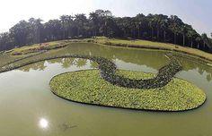 Há também plantas aquáticas (Foto: Divulgação)