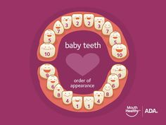 Here is the order that your child's baby teeth will appear in. Slight deviations are normal so if number 3 comes in before number 2 don't freak out! #kidsdentalhealth #didyouknow #dentaltip