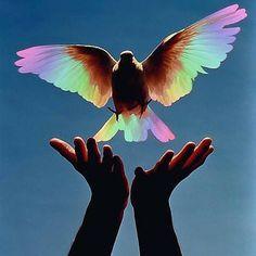 """""""Não fomos feitos para permanecer na dor. Nós devemos nos mover pelas nossas dores e ajudar uns aos outros a nos movermos pelos episódios dolorosos de nossas vidas. Quando permanecemos presos a nossas feridas, nós bloqueamos nossa própria transformação. Nós ignoramos os dons inerentes a elas - a força para superá-las e as lições que recebemos através delas. As dores são os meios para entramos nos corações das pessoas. Elas nos ensinam a ser compassivos e sábios."""" (Caroline Myss) foto…"""