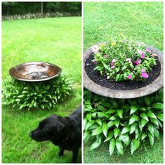 From crappy to happy!  An old fire-pit that wasn't being used to a flower bed...with more than one use!  Camo for that septic cover!!