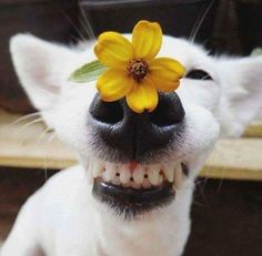 Smiley pup with flower 🌼🌸🌹 Animals And Pets, Baby Animals, Funny Animals, Cute Animals, Cute Puppies, Cute Dogs, Dogs And Puppies, Doggies, Smiling Dogs