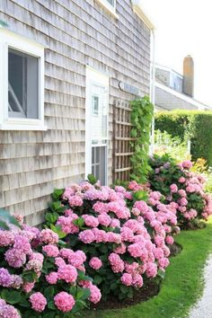 Incredible Flower Beds Ideas To Make Your Home Front Yard Awesome 370 Hydrangea Landscaping, Hydrangea Garden, Home Landscaping, Front Yard Landscaping, Hydrangea Flower, Hydrangeas, Hydrangea Bush, Peonies Garden, Landscaping Design