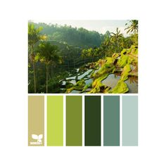 design seeds | search | for all who ♥ color ❤ liked on Polyvore featuring colors, design seeds, color palette, fillers and colours