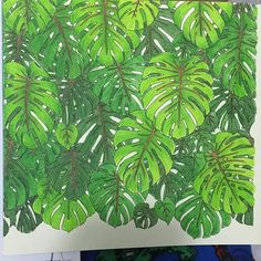 Three green inktense pencils - and one brown for the stems - a challenge to see how layers and pressure would change the finished product!  Rainforest Escape by Jade Gedeon  Inktense pencils  #adultcolouringbooks #adulting  #adultcolouring #adultcolouringbookreviews #colouring  #colouringbook #colouringbookreview #colouringbookforadults #colouringforadults #colouringforgrownups #colouringforpainrelief #colouringformindfulness #majesticcoloring #adultcolouringbooks #adultcoloring #adultcol...
