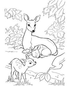 Siberian Husky Dog From Dogs Coloring Pages