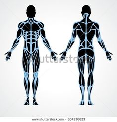 Male muscular anatomy vector scheme - posterior and anterior view. Fitness training, muscles street workout. Male fitness model.  Sport & fitness, muscle body. Exercise and muscle guide. Gym training.