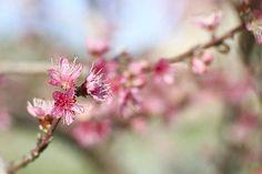 Spring is not far away by Isabel Pavía, via Flickr