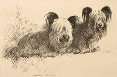 The Heavenly Breed Skye Terrier, Terrier Dogs, Terriers, Illustrations, Little Dogs, Dog Art, Heartbeat, Heavenly, Animals