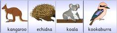 Australian Wildlife Primary Teaching Resources and Printables - SparkleBox