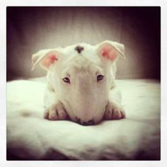 Cute Bulli!