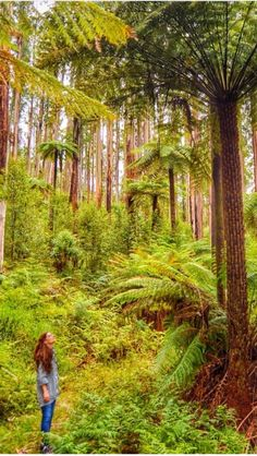 Black Spur Forest Yarra Valley, Victoria It's Wonderful, Yarra Valley, Count, Victoria, Ocean, Australia, Places, Life, Beautiful