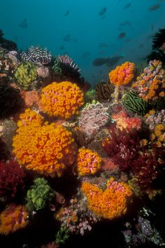 Vivid orange corals at Tatawa Besar | Eastbound in Indonesia|Underwater Photography Guide