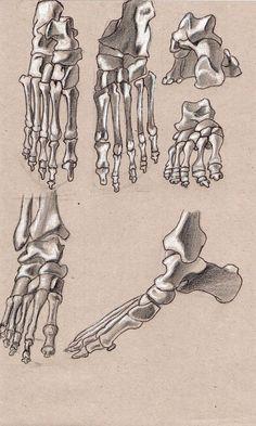 foot's bones by on DeviantArt Bone Drawing, Feet Drawing, Human Muscle Anatomy, Human Anatomy Art, Skeleton Drawings, Skeleton Art, Anatomy Sketches, Anatomy Drawing, Body Reference Drawing