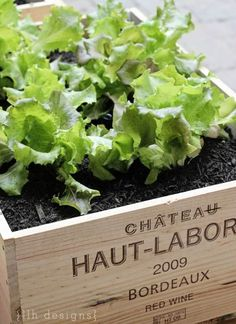 Container gardening using wine boxes check out link for how to get wine crate container garden So neat, and pretty is part of Wine box garden - Container Gardening, Gardening Tips, Urban Gardening, Organic Gardening, Wooden Wine Crates, Pot Jardin, Small Space Gardening, Garden Spaces, Garden Boxes