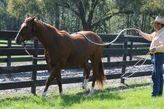 Horsenality Training Do's and Don'ts----really important!!! ~Parelli Natural Horsemanship