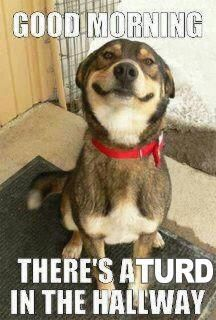 71 Best Funny Dog Quotes Images Funny Animals Funny Dogs Funny