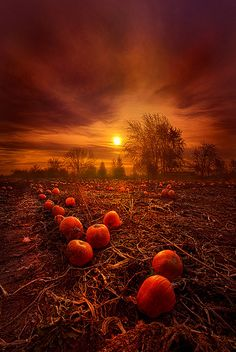 """""""The Forgotten Few"""" Wisconsin Horizons By Phil Koch. Fall Images, Fall Pictures, Halloween Pictures, Halloween Art, Nature Pictures, Happy Halloween, Mabon, Samhain, Harvest Moon"""