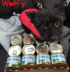 Wolfy loves our L.I.D. Chicken & Sweet Potato canned food!  (Facebook fan photo)