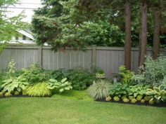 shade garden with hostas and ferns