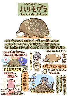 Animals And Pets, Cute Animals, Animal Graphic, Echidna, Cute Animal Drawings, Animal 2, Creature Concept, Weird Creatures, Funny Cute