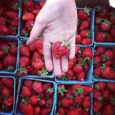 Beautiful strawberries headed to the Salt Spring Farmers Market Farmers Market, Strawberries, Islands, Salt, Drink, Fruit, Beautiful, Food, Strawberry Fruit