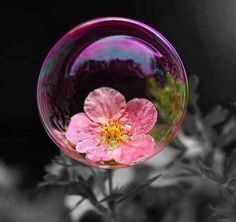 Flower In A Bubble!