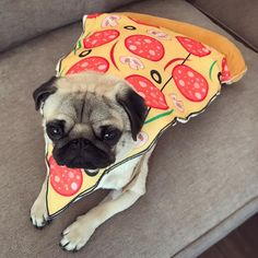 So it's true you are what you eat  #puglife . . Thanks to @rubiespetshop for the awesome costume!