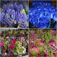 En Bruflor celebramos el lunes con una gran variedad de flores que han mandado desde Holanda