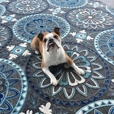 Your patio is not complete without your pup-approved Portera rug! (PRT-1065) Photo: @sgallopdesign