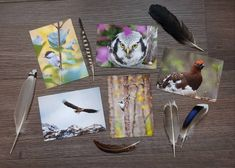 Bird photography - postcard bundle