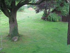 ...mein Gartenbaum...
