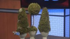 Moss Topiaries: Two Types - by Cynthia Gillooly, B.B. Barns