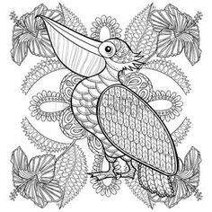 Zentangle Coloring Page With Pelican In Hibiskus Flowers Illustartion For Adult Books