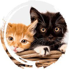 Litter Box Farmhouse Style Credenza | Litter-Robot Litter Robot, Rustic White, Modern Farmhouse Style, Cat Furniture, Credenza, Creatures, Cats, Box, Animals