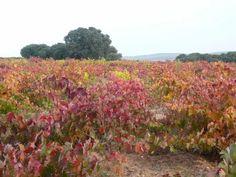 Vinos Spanish Wine, Vineyard, Organic, Plants, Outdoor, Wine, Wine Cellars, Paths, Outdoors