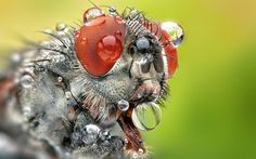 Everything You Need to Know About Macro Photography #photography #phototips http://digital-photography-school.com/everything-you-need-to-know-about-macro-photography/