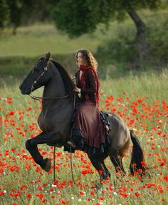 That would be so cool to ride in a field of flowers on such a majestic horse