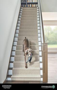 Chase 00712 Carpet Flooring In 2019 Carpet Stairs Fur Carpet, Wall Carpet, Beige Carpet, Patterned Carpet, Carpet Flooring, Carpet Staircase, Staircase Runner, Stairs With Carpet Runner, Best Carpet For Stairs