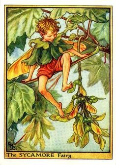 The Sycamore Fairy. Vintage flower fairy art by Cicely Mary Barker. Taken from 'Flower Fairies of the Trees'. Click through to the link to see the accompanying poem. Cicely Mary Barker, Art And Illustration, Vintage Illustrations, Fairy Pictures, Vintage Fairies, Beautiful Fairies, Flower Fairies, Fairy Art, Faeries