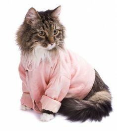 cat in clothes   Cat Clothes and Accessories   Cat-Clothes.comCat Clothes and ...